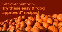Are you struggling with what to do with all that left over pumpkin? We have 4 delicious recipes for you to try, you can use stuff-able toys or tracheas for these lovely treats - or to make it a Halloween theme by using special moulds. You can give these as treats or with their dinner to make it that little bit more special.Did you know? Pumpkin is a lovely vegetable for dogs and is often used if your dog is suffering from digestive upset (for both diarrhoea or constipation). They are an...