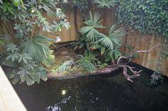 Cuban Crocodile Pool; Paignton Zoo Environmental Park, Great Britain