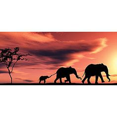 Use the African Sunset Photo Backdrop to create a great Safari themed setting. The African Sunset Backgrounds come in three great materials and six sizes.