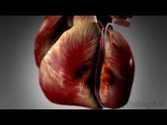 En månad innan en hjärtattack kommer din kropp varna dig - här är de dolda tecknen alla borde känna till