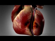 ▶ 3D Medical Animation - What is a Heart Attack? - YouTube