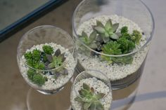 Make Your Own Succulent Terrarium @ Letters from Lala