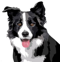 Border Collie decal sticker set of 2 van op Etsy All Dogs, I Love Dogs, Border Collie Colors, Border Collie Art, Perros Border Collie, Herding Dogs, Dog Paintings, Dog Names, Dog Portraits
