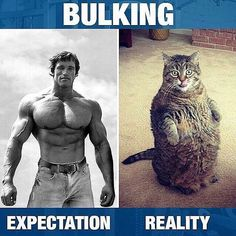 - When bulking season hit you harder than you expected...  - TAG a friend who is Bulking right now! by bodybuilding_motivation