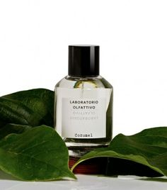 Cozumel via @TheCools // Gathering reflections from a past journey, the nose has infused the olfactory pyramid with some Mexican sun, wafts of aromatic herbs mixed with the intimate smell of men's skin and the wild smells of a distant island. This aromatic, passionate fragrance oscillates constantly between warmth and coolness. Wild and narcissistic, it melds notes of fresh tobacco, Indian hemp and velvety wood.