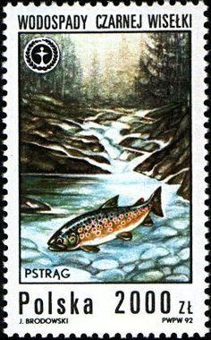 Stamp: River Trout (Salmo trutta fario), Black Waterfall (Poland) (Protection of the environment) Mi:PL 3379,Sn:PL 3086,Yt:PL 3180,Sg:PL 3405,AFA:PL 3271,Pol:PL 3231