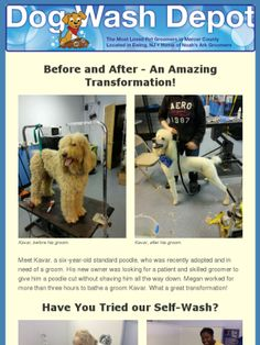How to wash your dog at dog wash depot ewing nj dogwashdepot look at this amazing transformation of a rescued dog groomed at dog wash depot ewing solutioingenieria Gallery
