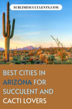 Find the best cities in Arizona for succulent and cacti lovers. The warm, dry summers and mild winters make it an ideal climate for succulents and cacti alike. These cities are perfect for succulent lovers looking for the ideal vacation destination or a new place to call home. See them here! #succulents #indoorgardening #outdoorgardening #gardeningtips #cacti Indoor Succulents, Succulents Garden, Cactus Plants, Succulent Care, The More You Know, Types Of Plants, Best Cities, Houseplants, Gardening Tips