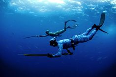 Spearfishing Rules & Regulations in NSW