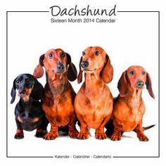 Dachshund 2014 Calendar by Avonside Publishing LTD.,http://www.amazon.com/dp/1849819432/ref=cm_sw_r_pi_dp_07FZsb0WR0A7730C