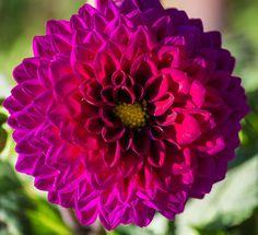 Beauty In Nature Blooming Botany Flower Flower Head Flowers,Plants & Garden Flowers_collection Nature Petal Purple Flower Single Flower Softness Springtime
