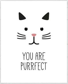 perfect Crazy Cat Lady, Crazy Cats, Cat Posters, Cat Party, Animal Crafts, Cat Stuff, Cool Cats, Painted Rocks, Animals And Pets