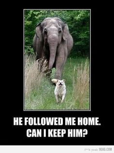 BFFs in real life Tarra the elephant & Bella the dog