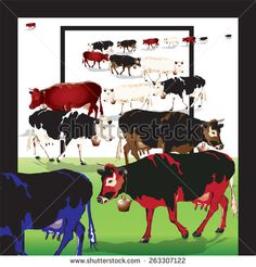 Cows. Vector, illustration.