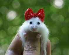 Minnie MOUSE- Get it? (BTW it isn't a mouse, it's a hamster) More