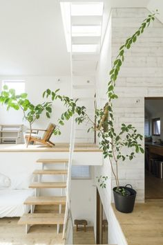 that house plant + those stairs