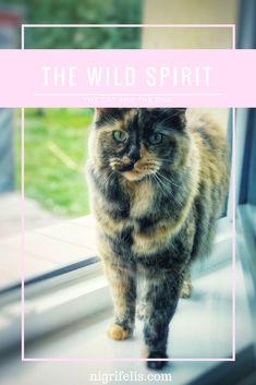 The wild spirit