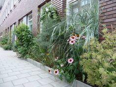 No garden? No problem! Create a 10 - 20 inch wide garden along the edges of your house!