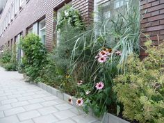 No garden? No problem! Create a 10 - 20 inch wide garden along the edges of your house!