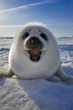 Happy cute seal pup