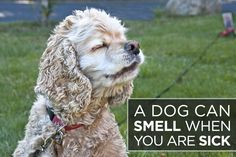 11 Fascinating Facts You Never Knew About Dogs