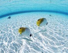 Two fish in clear water,circular.