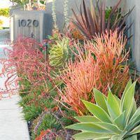 Rogers Gardens Landscape | Gardens...mixing succulents w/DT (drought tolerant) plants...