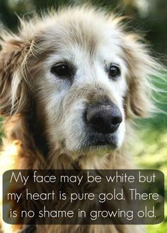 ah.. so true.. ❤️❤️❤️  #dog #dogs #dogsperts #pets #love #doglovers #cute #cuteness #puppies #pup #pups #happydog #goldenretriever #retriever #dogquotes