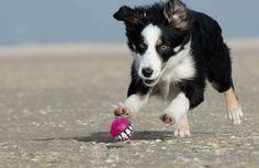 Odeur de chien dans la maison, 10 trucs pour éliminer la mauvaise odeur de chien mouillé dans la maison.