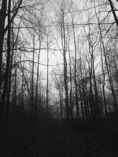 Happy Stars Shine The Brightest -{ Maybeanothername }× Misty Forest, Dark Forest, Black And White Tree, Afraid Of The Dark, Landscape Wallpaper, Dark Photography, Dark Places, Mountain Landscape, Macabre