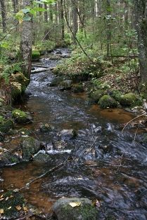 Luonto!  Lukuisat luontokohteet kutsuvat sinua... Finland, Outdoor, Beautiful, Egg, Nature, Outdoors, Outdoor Games, Outdoor Living