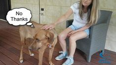 Dog Body Language, Behavioral Issues, Dog Behavior, Dog Training, Pet Dogs, Dog Lovers, Labrador Retriever, Pup, Kitty