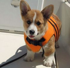 doggylifejacket