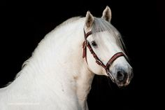 Beautiful Horse Pictures, Beautiful Horses, Horse Girl, Horse Love, Draft Horses, White Horses, Donkeys, Character Ideas, Sweet Dreams