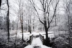 Where I walk each day... Love all four seasons.