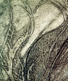 Sue Lowe 'Seed Studies' triptych collagraph print, detail showing texture from leaf skeleton.
