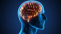Elcerebro es el órgano más importante de nuestro cuerpo,ya quea través de él es que las funciones del organismo se cumplen de manera correcta. El cerebro es el órgano central del cuerpo humano, se encarga