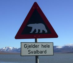 The biggest threat on Svalbard is polar bears (isbjørn). If travelling outside settlements you are required to carry a rifle at all times to protect yourself. Photo: Ole Selberg