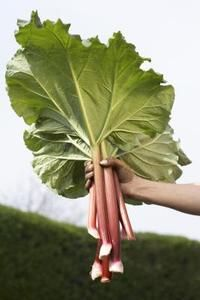 Hardy rhubarb plants supply one of the few perennial vegetables in the home garden. Rhubarb grows best in U. Department of Agriculture hardiness zones 3 through where winter temperatures drop . Perennial Vegetables, Planting Vegetables, Vegetable Gardening, Veggies, Organic Gardening, Gardening Tips, Arizona Gardening, Flower Gardening, Leaf Stepping Stones