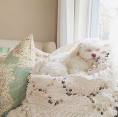 Beems little rescue puppy loves to nap on big piles of Pottery Barn pillows D Is For Dog, Pottery Barn Pillows, Rescue Puppies, Anatole France, Crazy Dog Lady, Puppies And Kitties, Online Pet Supplies, Happy Dogs, Dog Friends