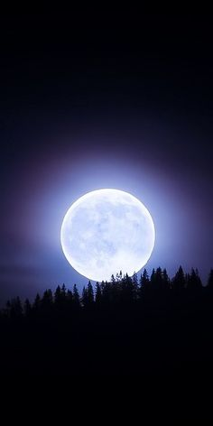Moon Photos, Moon Pictures, Nature Pictures, Beautiful Pictures, Moonlight Photography, Moon Photography, Bark At The Moon, Night Walkers, Moon Art