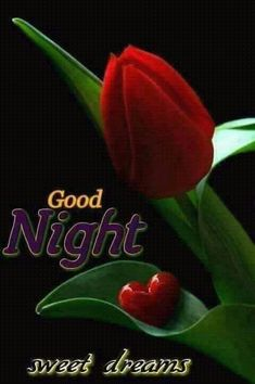 Goodnight My Love - Solo Imagenes Good Night Cat, Good Night I Love You, Good Night Friends, Good Night Wishes, Good Night Sweet Dreams, Evening Greetings, Good Night Greetings, Good Night Messages, Good Night Quotes