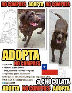 Busca el milagro de la adopciòn!! Porque para el amor NO hay edad #AdoptaUnAdultoRescatado El Quisco/Chile.