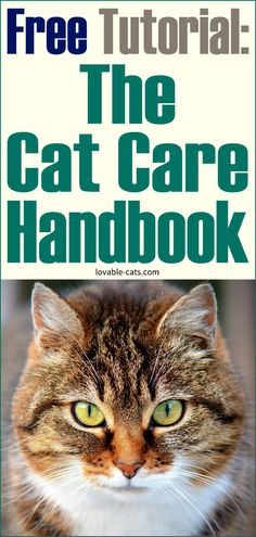 Free Tutorial: The Cat Care Handbook Funny Animal Videos, Funny Animals, Cute Animals, Cat Toilet Training, Household Pests, Animal Projects, Cat Treats, Animals Beautiful, Cats And Kittens