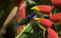 24 Plantas para atrair borboletas e beija-flores no jardim