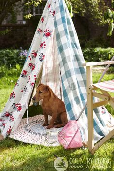 Perfect for hot summer Texas Hill Country Days!  Dog in a homemade tepee. Photo: Paul Viant. countryliving.co.uk
