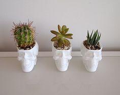 1 x cráneo plantador jardín de cristal vidrio blanco para la decoración de Cactus o planta suculenta titular florero cabeza