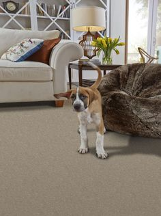 Capell Flooring And Interiors In Meridian, ID Carpet Phenix Flooring Product:  Gallery Row Color