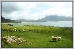 Ireland Photograph, St. Patricks Day, , Sheep Grazing on an Irish Beach, Landscape