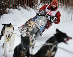 Mush!  Rookie Marie-Anick Alie of NWT, Canada.  Sled dogs doing what they do best!  Fly, puppies, fly!  Anchorage, Alaska.